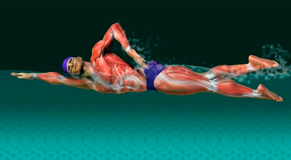 Perder peso rápido com a natação - benefícios musculares foto